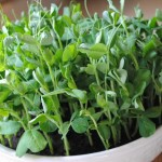 Growing Pea Shoots